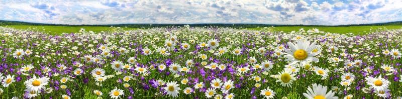 Wiosny krajobrazowa panorama z kwieceniem kwitnie na łące zdjęcie royalty free
