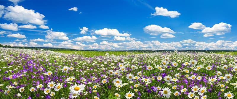 Wiosny krajobrazowa panorama z kwieceniem kwitnie na łące zdjęcia royalty free