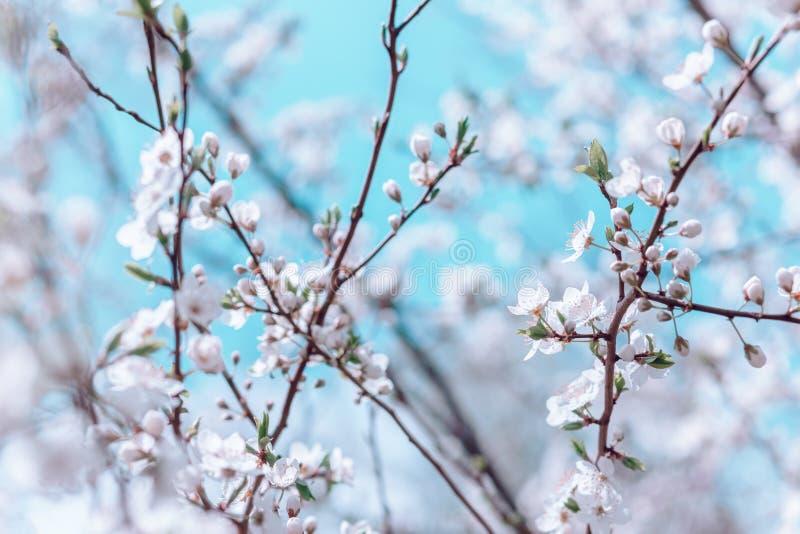 Wiosny kwiecisty okwitni?cie obraz royalty free