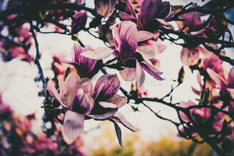 Wiosny Kwitnąć zdjęcie royalty free