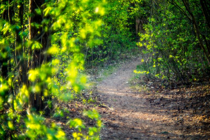 Wiosny lasowa ścieżka zdjęcie royalty free