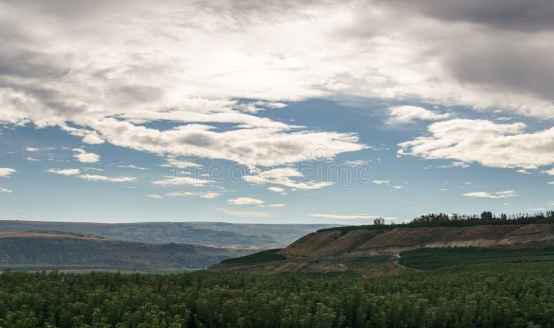 Wiosny lata zmierzchu tła zieleni pola scenerii krajobraz z chmurą i niebieskim niebem obraz royalty free