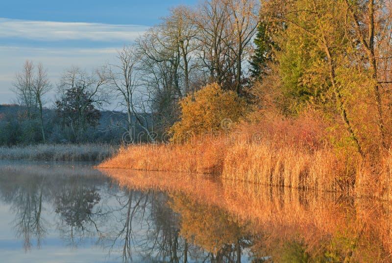 Wiosny linii brzegowej Whitford jezioro obraz royalty free