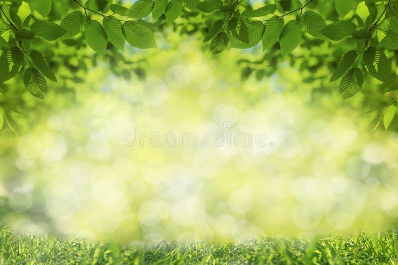 Wiosny lub lata tło, zielona drzewo liści rama obraz stock