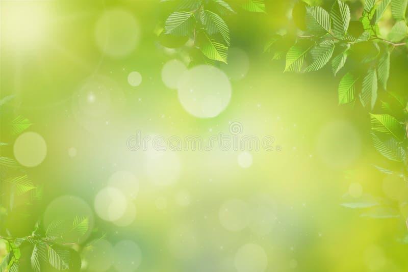 Wiosny lub lata tło, zielona drzewo liści rama obraz royalty free