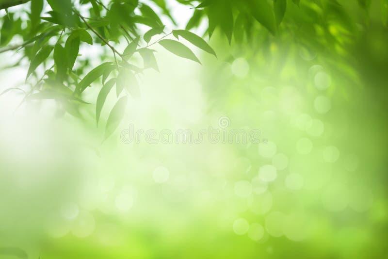 Wiosny lub lato natury tło, zielona drzewo liści rama fotografia royalty free