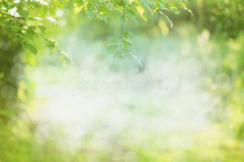 Wiosny lub lato natury tło obraz royalty free