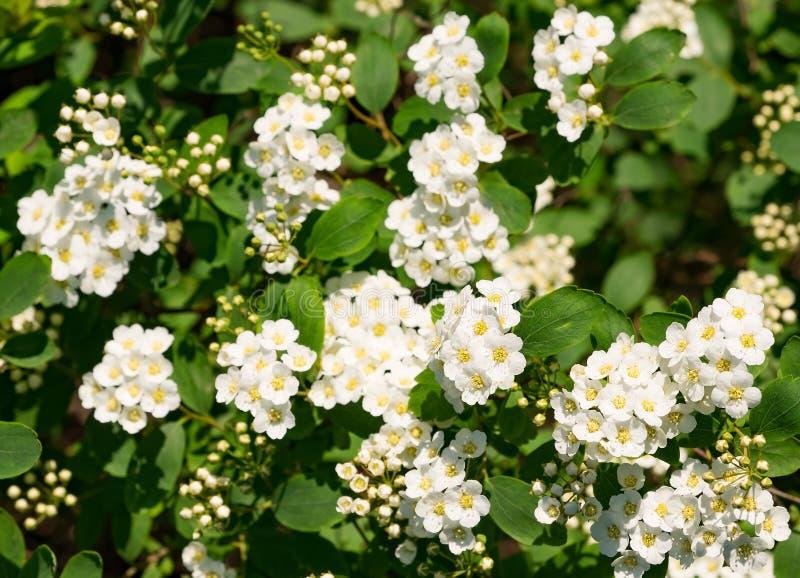 Wiosny lub lato natury tło z kwitnienie roślinami fotografia stock