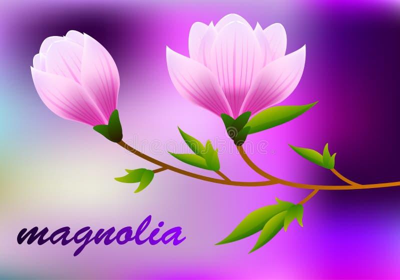 Wiosny magnoliowy tło z okwitnięcia śniadanio-lunch różowi kwiaty wektor royalty ilustracja