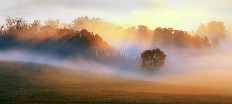 Wiosny mgła, drzewa jest mokrym, wilgotnym mgłą las, obraz royalty free