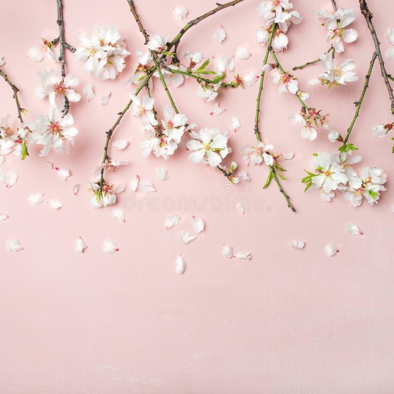 Wiosny migdałowy okwitnięcie kwitnie nad światłem - różowy tło, kwadratowa uprawa fotografia stock