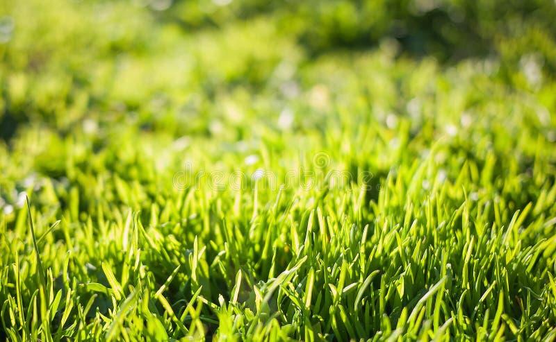 Wiosny natury tło z zieloną trawą obraz stock