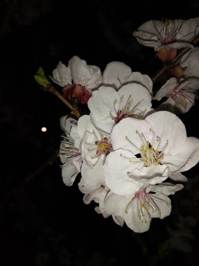 Wiosny noc obrazy royalty free