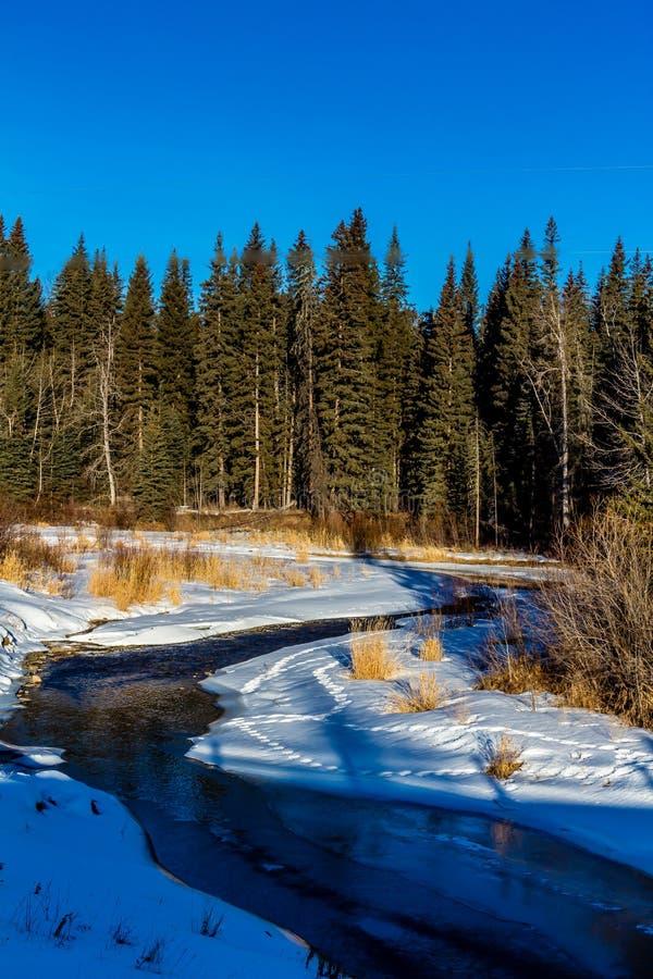 Wiosny odwilż wzdłuż Tay, Tay Rzeczny Małomiasteczkowy Rekreacyjny teren, Alberta, Kanada obrazy royalty free
