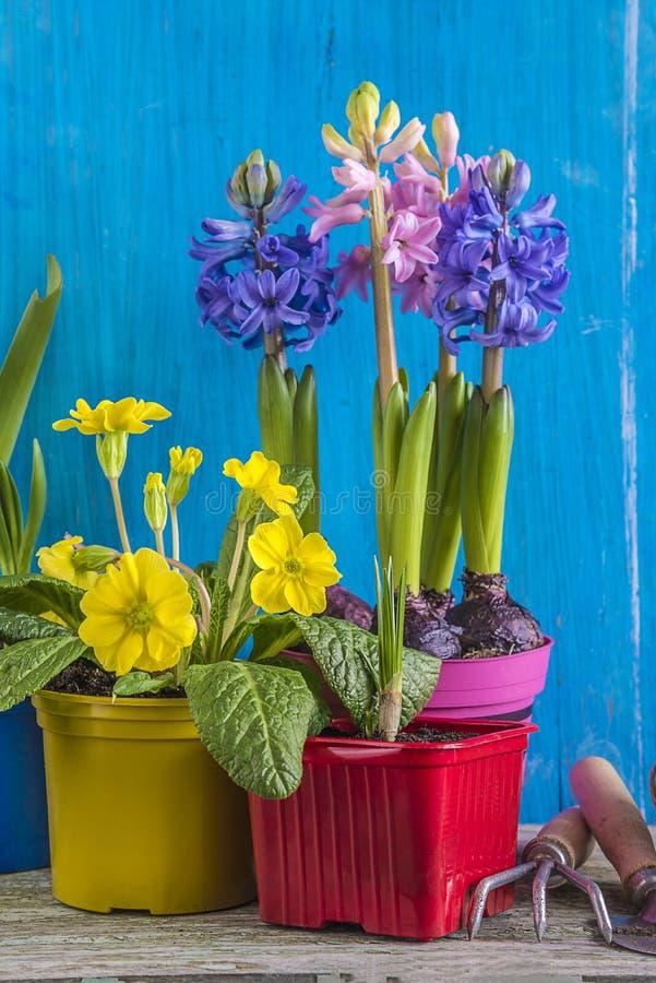 Wiosny ogrodnictwa pojęcie obraz royalty free