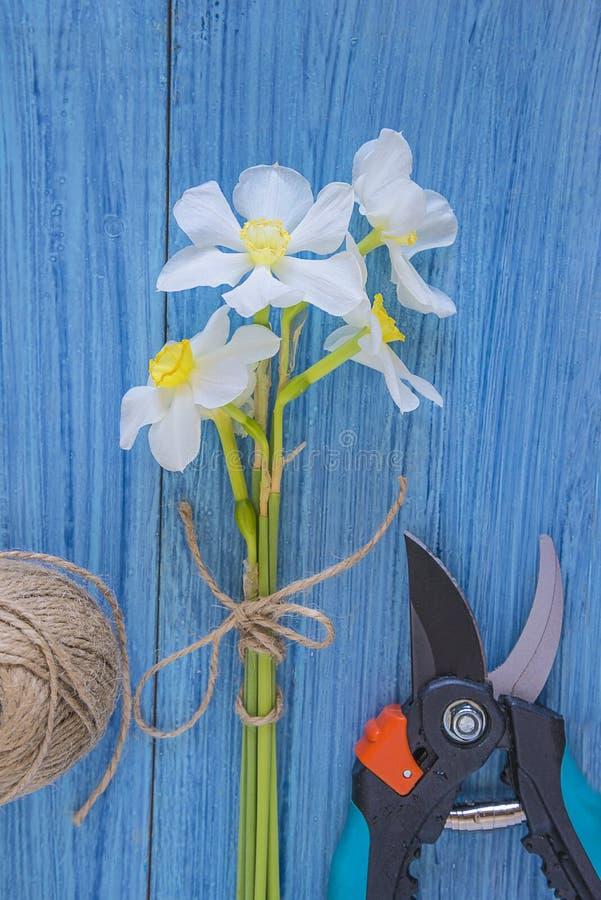 Wiosny ogrodnictwa pojęcie zdjęcie royalty free