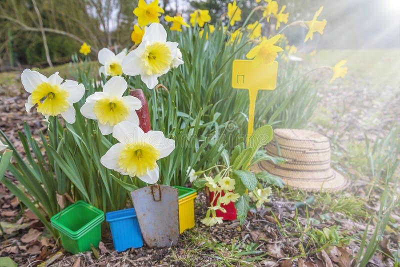 Wiosny ogrodnictwa pojęcie zdjęcie stock