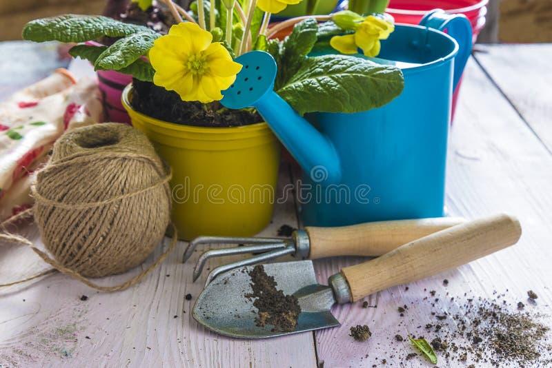 Wiosny ogrodnictwa skład z żółtymi kwiatami w żółtym garnku obrazy royalty free