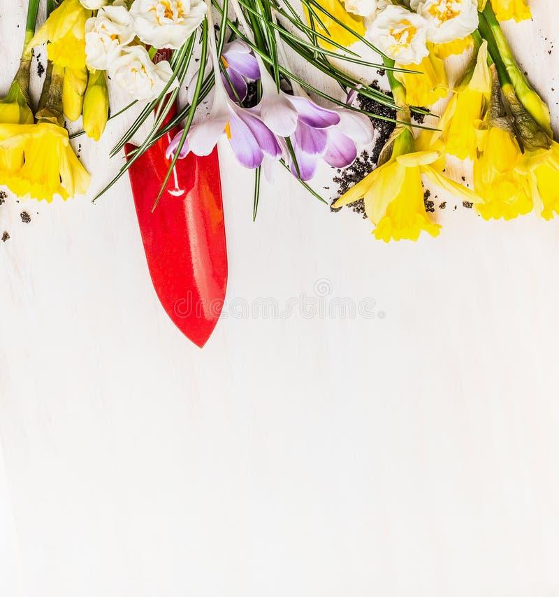 Wiosny ogrodnictwo z czerwoną ręki łopatą, kwiatami i: daffodils i krokusy na białym drewnianym tle obrazy royalty free