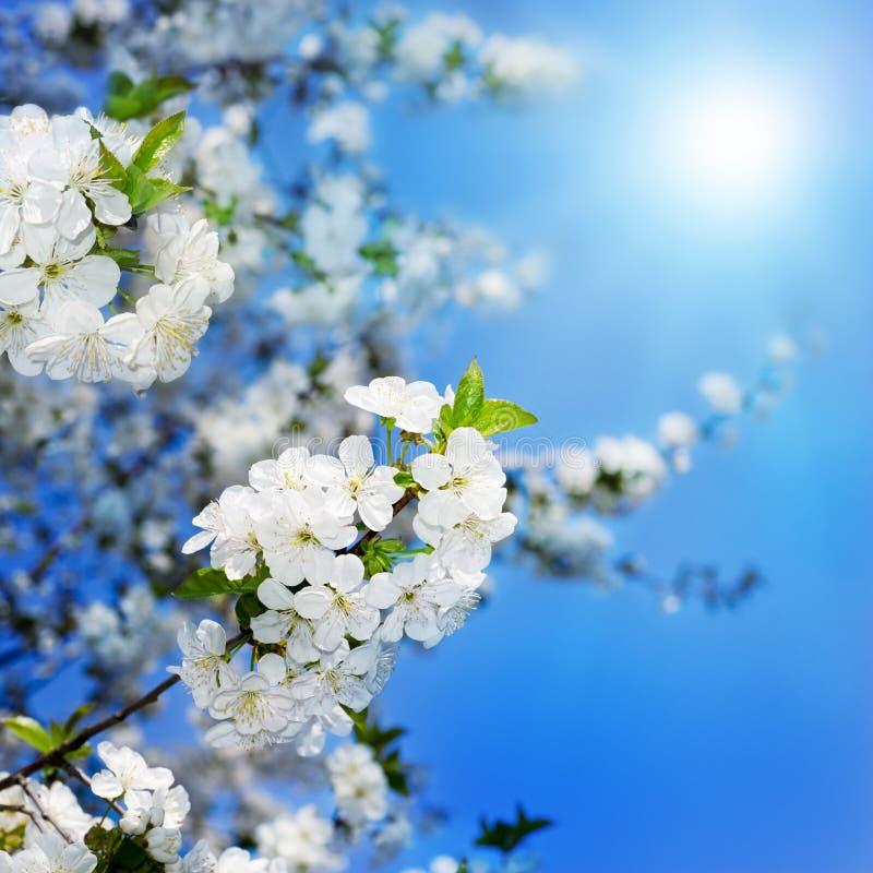 Wiosny okwitnięcia tło zdjęcia stock