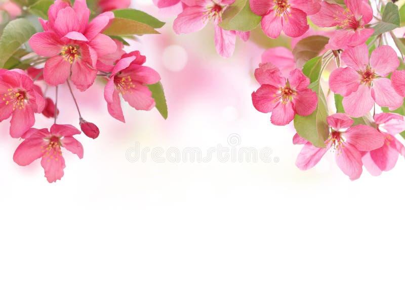Wiosny okwitnięcie zdjęcie stock
