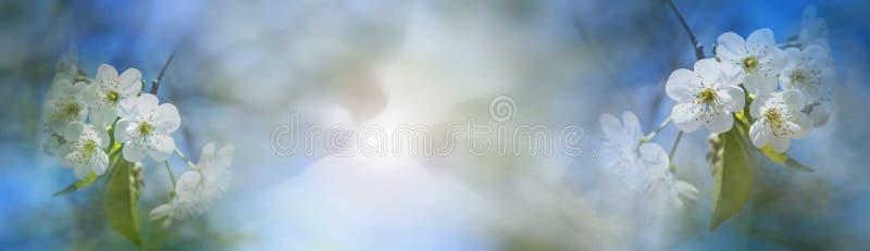 Wiosny okwitnięcie nad zamazanym natury tłem z światłem słonecznym, zakaz obrazy stock