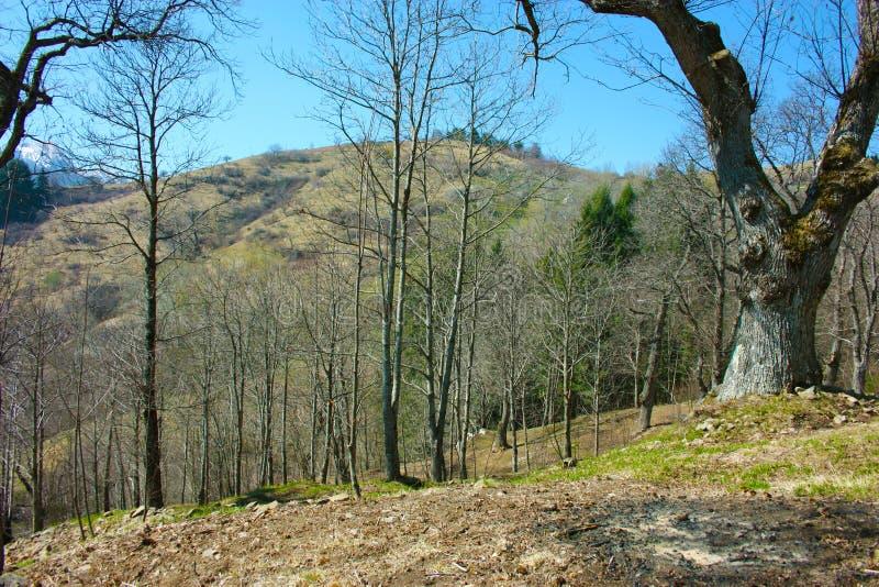 Wiosny panorama Careggine, sucha ziemia i nadzy drzewa, ziemia jest sucha i krzak wysiedlająca także w Tuscany należnym susza zdjęcie stock