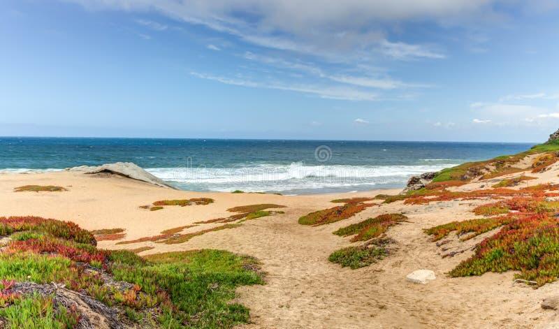 Wiosny Plażowy ulistnienie przy Monterey zatoką, Kalifornia zdjęcie stock