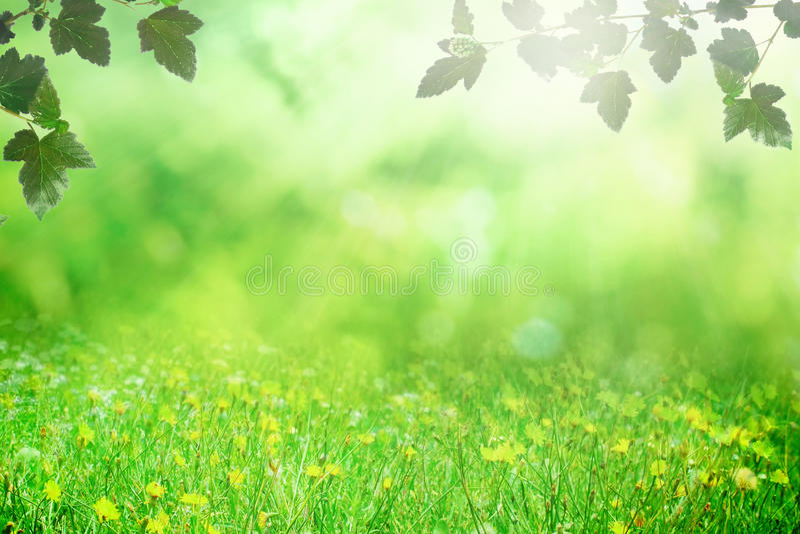 Wiosny pole obrazy royalty free