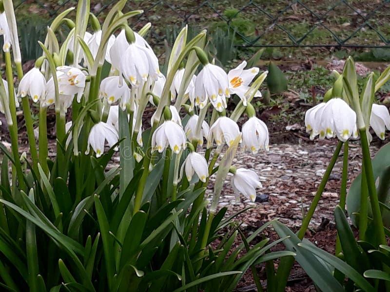 Wiosny przybycie zdjęcia stock