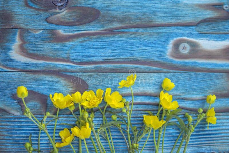 Wiosny ranunculus, jaskier obrazy stock