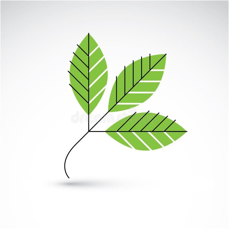 Wiosny rowan liść, botanika i eco mieszkania wizerunek, Wektorowy Illustratio ilustracji