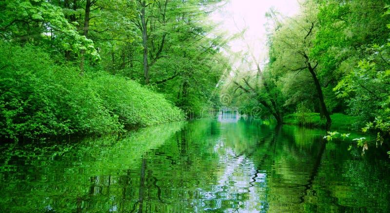 Wiosny słońca i stawu lasowi promienie zdjęcia royalty free