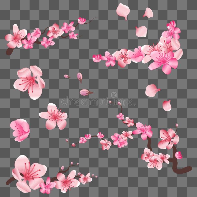 Wiosny Sakura kwitnienia czereśniowi kwiaty, różowi płatki i gałąź na przejrzystym tle, royalty ilustracja