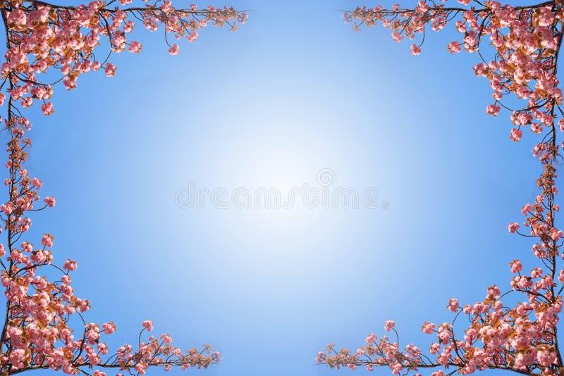 Wiosny Sakura rama na niebieskim niebie obraz royalty free