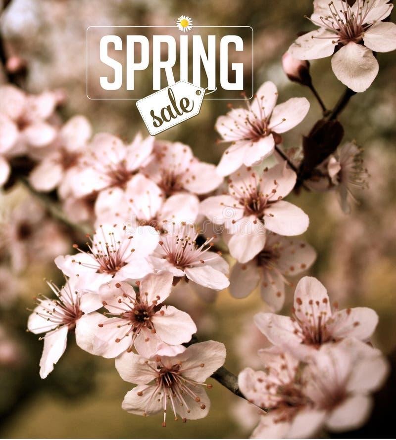 Wiosny sprzedaży czereśniowego okwitnięcia tło obraz royalty free