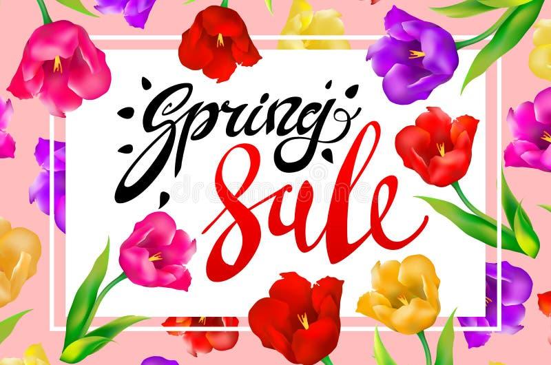 Wiosny sprzedaży sztandar, colotful tulipanów kwiaty różowi tło z literowaniem Szablon dla powitanie pocztówki Wektorowa ilustrac royalty ilustracja