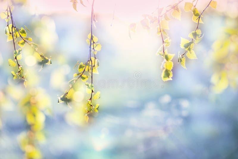 Wiosny tło, zielony drzewo opuszcza na zamazanym tle zdjęcia royalty free