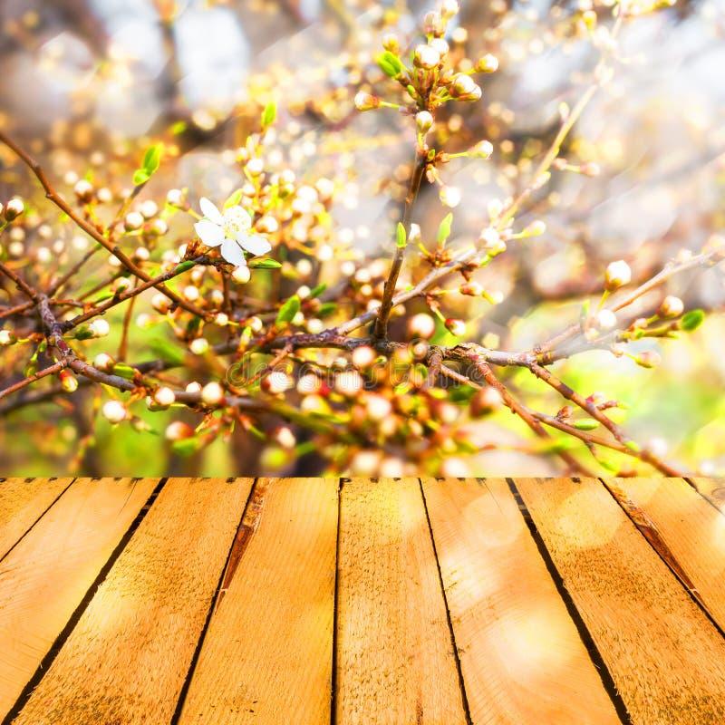 Wiosny tła kwitnący drzewny drewniany panel obraz stock