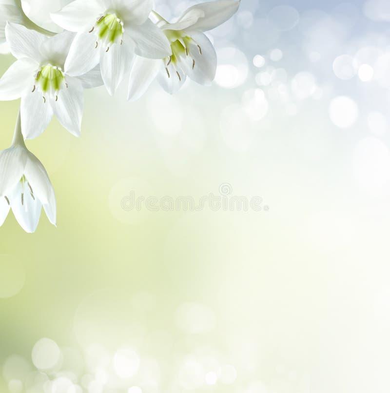 Wiosny tło zdjęcie stock