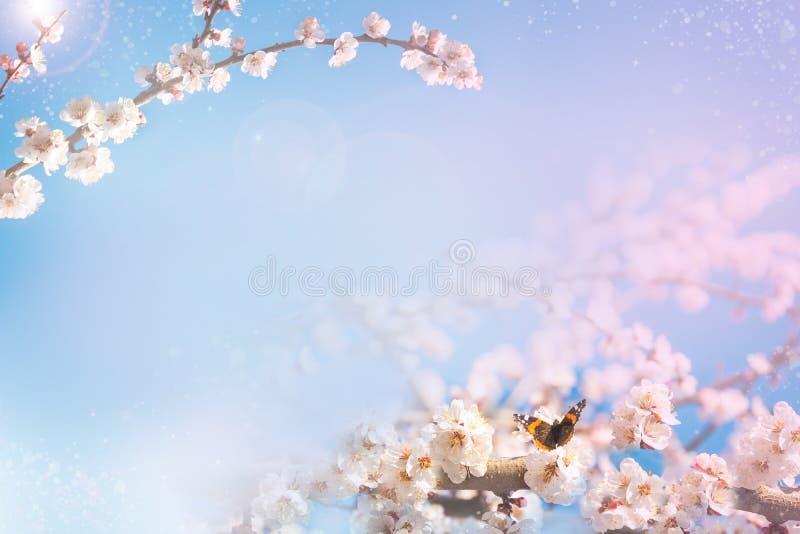 Wiosny tło z kwiatonośną gałąź Motyl na kwiacie obraz royalty free