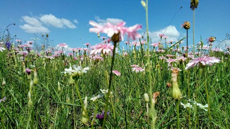 Wiosny trawy t?o z kwiatami i traw? obraz stock
