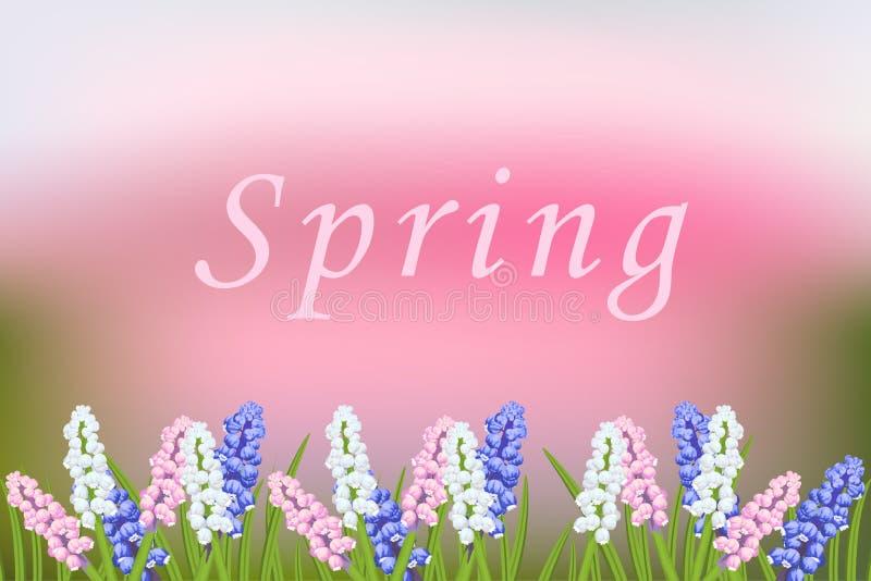 Wiosny wektor zamazujący tło z kwitnienie kwiatami Muscari royalty ilustracja