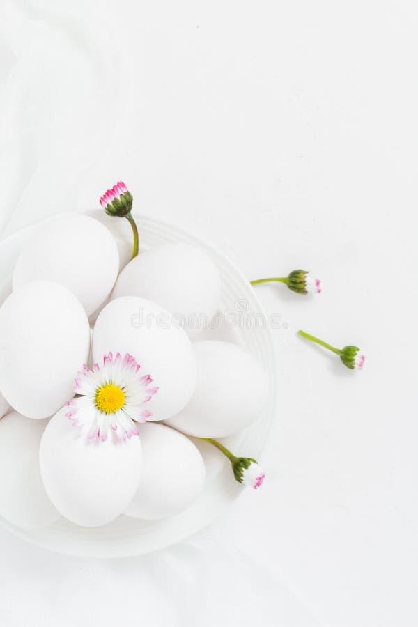 Wiosny Wielkanocny tło z białych jajek stokrotką kwitnie zdjęcia stock