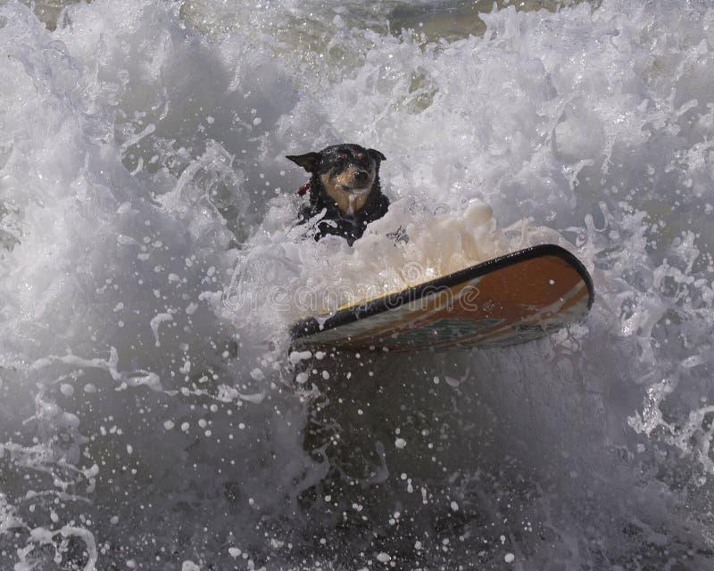 Wipeout surfant de chien images libres de droits