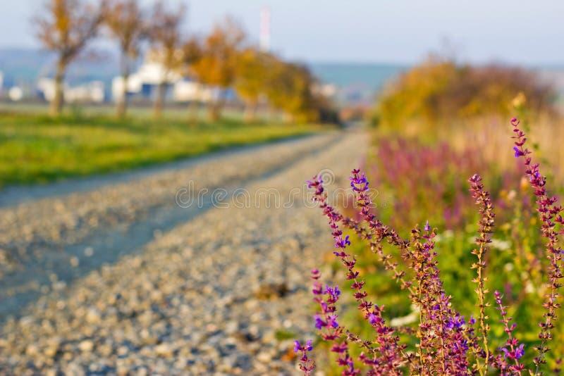 Żwir ścieżka w jesieni z Fiołkowymi kwiatami zdjęcie stock