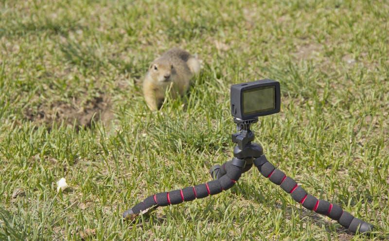 Wir entfernen den Gopher auf einer Videokamera stockbild
