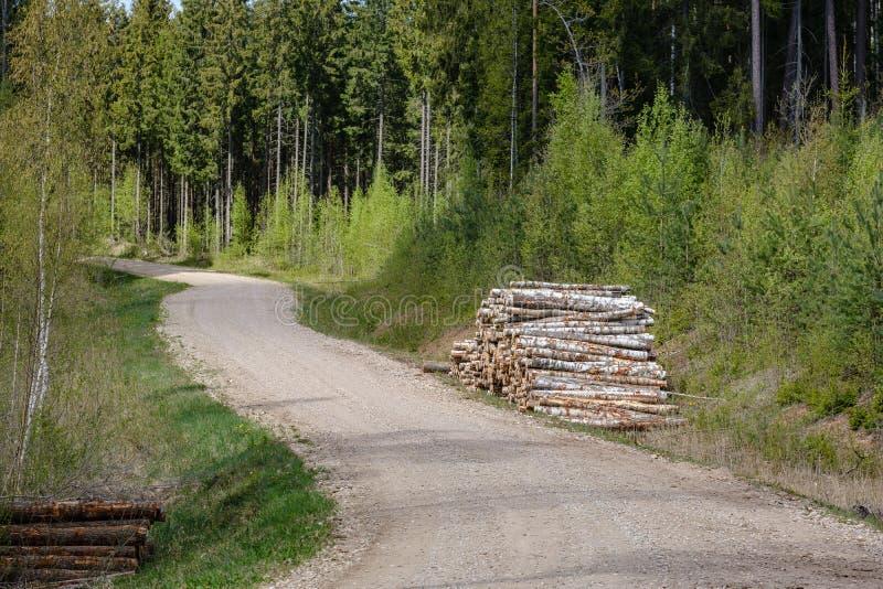 ?wir wiejska droga w zielonym lesie z drzewnymi baga?nikami w ampule wypi?trza na stronie fotografia stock
