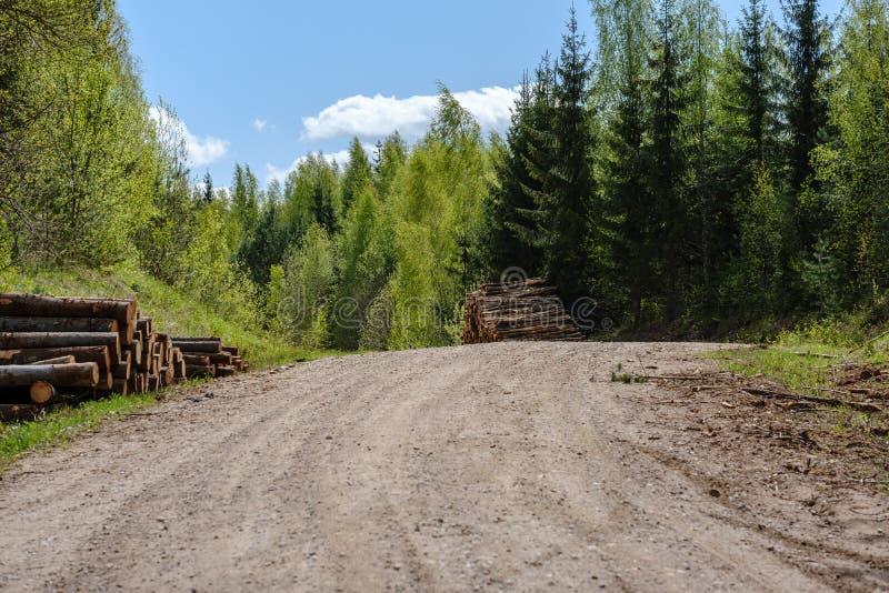 ?wir wiejska droga w zielonym lesie z drzewnymi baga?nikami w ampule wypi?trza na stronie zdjęcia stock
