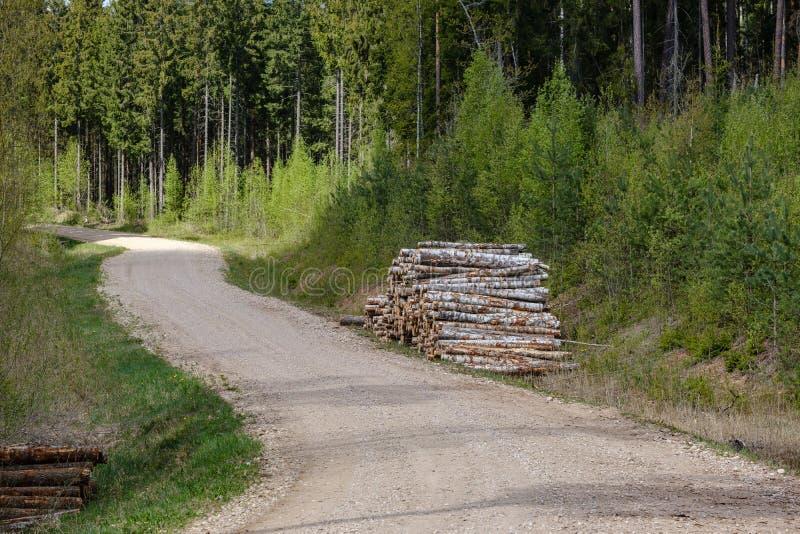 ?wir wiejska droga w zielonym lesie z drzewnymi baga?nikami w ampule wypi?trza na stronie zdjęcia royalty free